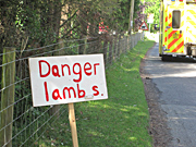 Danger Lambs, not Danger Mouse!