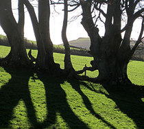 Silhouette trees in Wye Valley, Powys, Mid Wales, UK